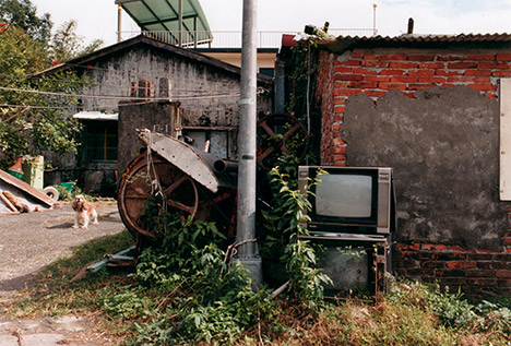 View of yard with old television and dog