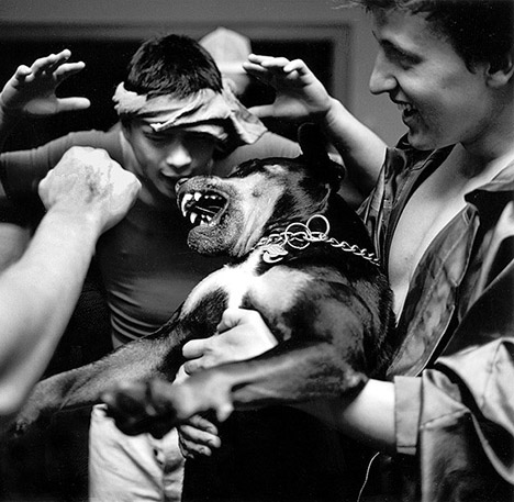 group of guys with a dog bearing its teeth