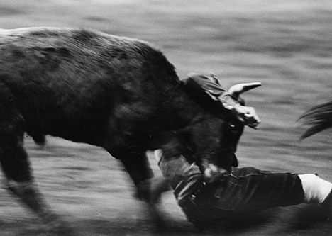 fast action photo of a steer and cowboy below the head