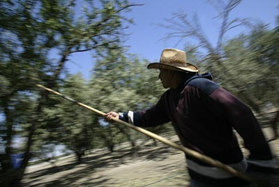 Man working in an orchard