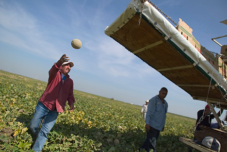 farmworker tossing a melon onto a vehicle